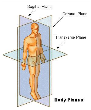 https://i0.wp.com/upload.wikimedia.org/wikipedia/commons/3/34/BodyPlanes.jpg