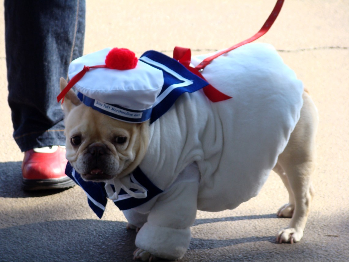 Stay puft french bulldog (2956799679) Pitbull Clothes For Dogs