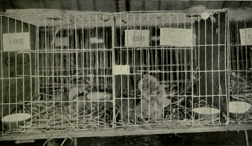 File:Richmond Cat Show - Cages.jpg