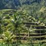 Subak Irrigation Wikipedia