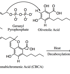 file biosynthesis of cbc png [ 2538 x 850 Pixel ]