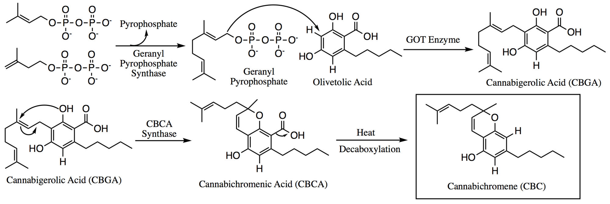 hight resolution of file biosynthesis of cbc png