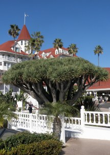 File Coronado Ca Usa - Hotel Del Dragon Tree