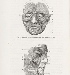 file diagrams of muscles of the face from darwins expressions wellcome l0049534 [ 4036 x 5893 Pixel ]