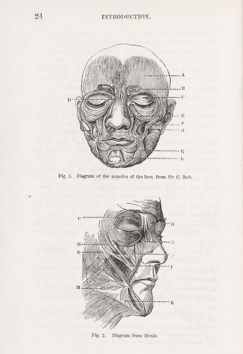 small resolution of file diagrams of muscles of the face from darwins expressions wellcome l0049534