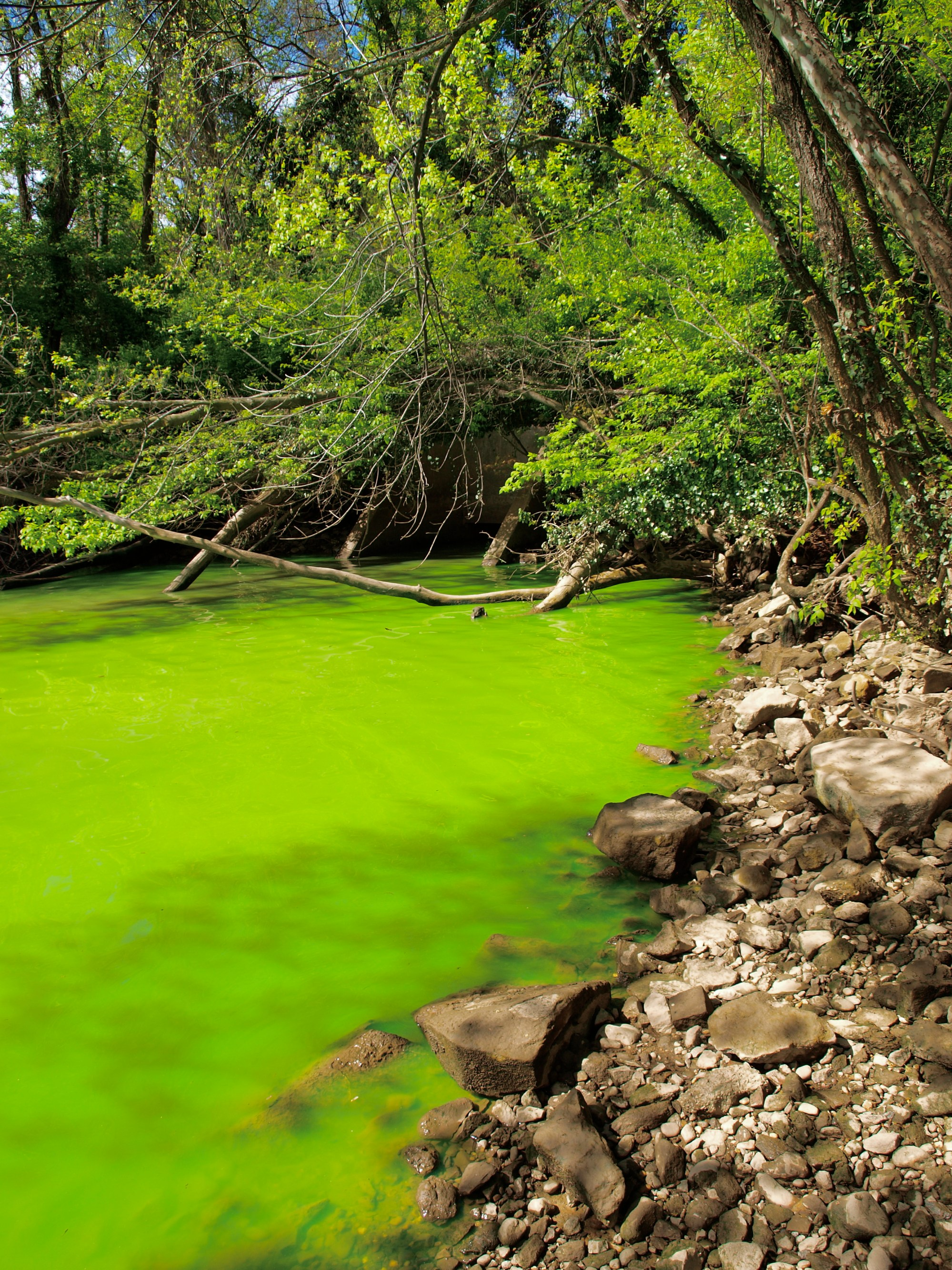 hight resolution of eutrophication