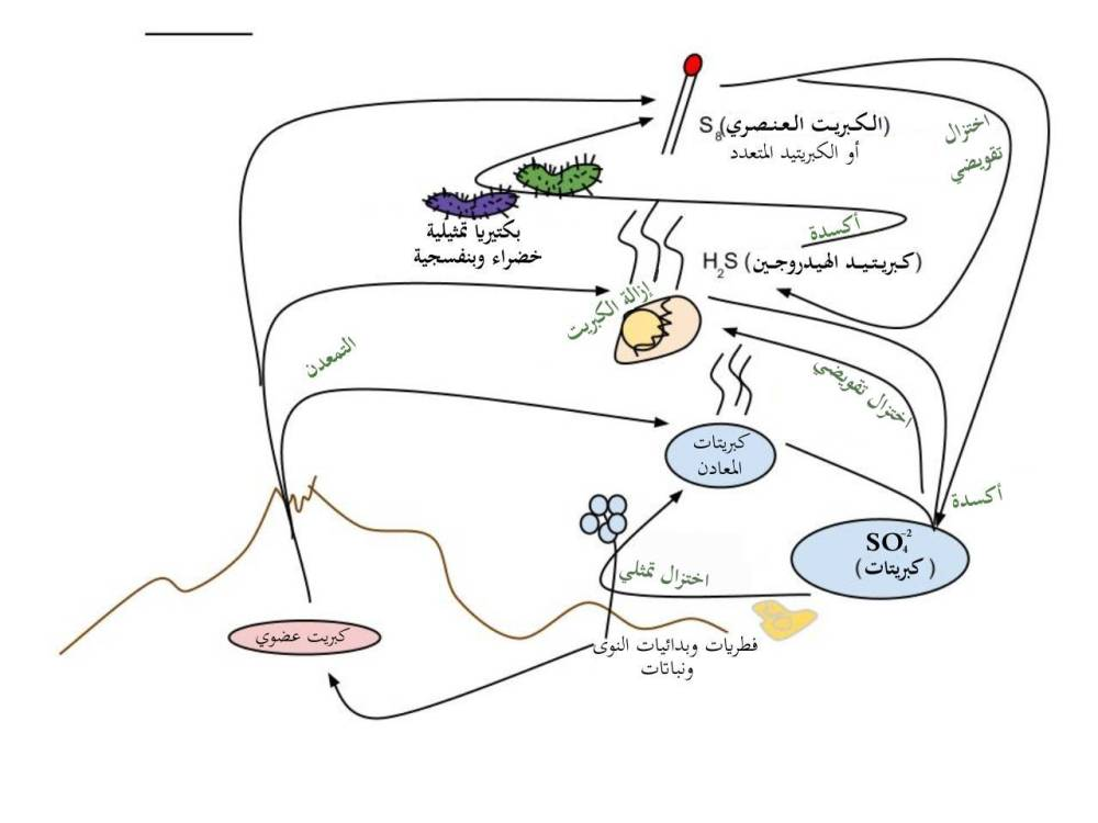 medium resolution of file sulfur cycle arabic jpg