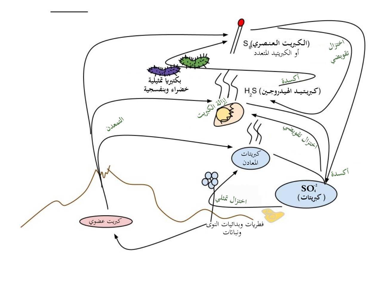 hight resolution of file sulfur cycle arabic jpg