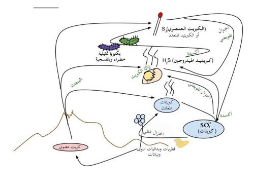 small resolution of file sulfur cycle arabic jpg