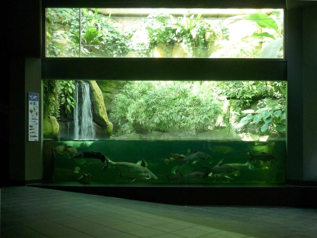 fish aquarium zoo exploring omaha scott aquarium henry doorly zoo 2017 fish tank maintenance. Black Bedroom Furniture Sets. Home Design Ideas