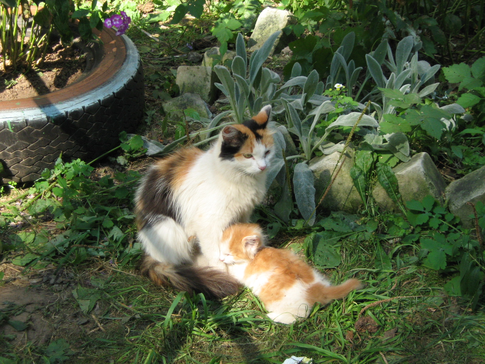 File C Kstovo Calico Cat With Kitten