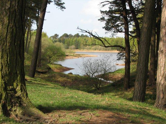 Image result for harlaw woodland walk pentlands