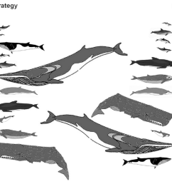 file branching diagrams showing the ecological and evolutionary relationships among cetaceans png [ 1647 x 1091 Pixel ]