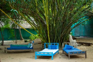 5 Things You Need To Know About Bamboo Plants For Privacy Bamboo Plants Online