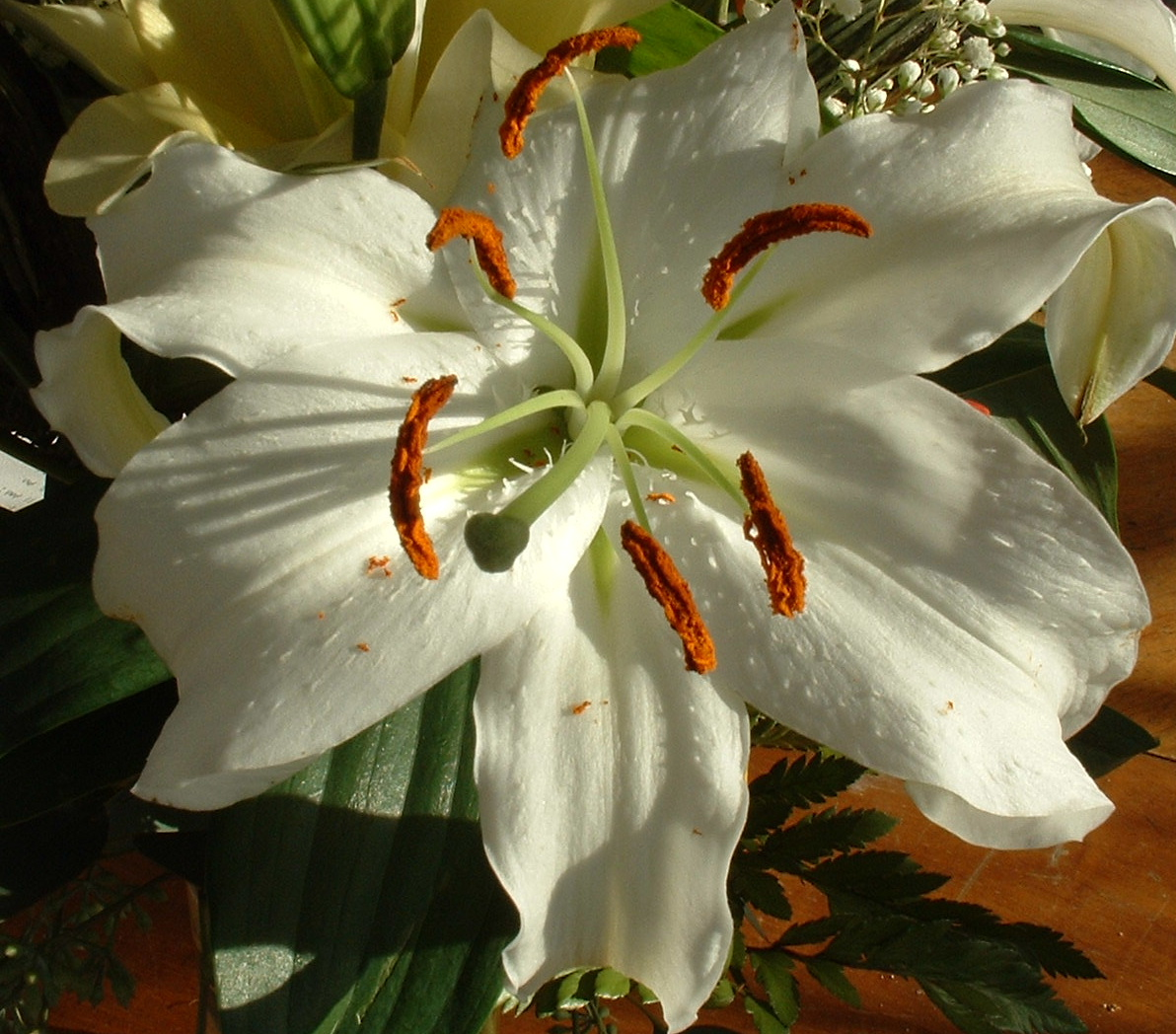 https://i0.wp.com/upload.wikimedia.org/wikipedia/commons/3/3a/Lily_white.jpg