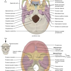 Unlabeled Skull Diagram Inferior View 07 Cobalt Ls Stereo Wiring Superior Free Engine Image For