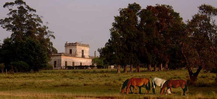 Agriculture in Uruguay  Wikipedia
