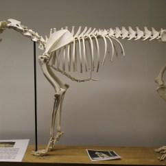 Wolf Skeleton Diagram 68 Camaro Steering Column Anatomy Car Interior Design