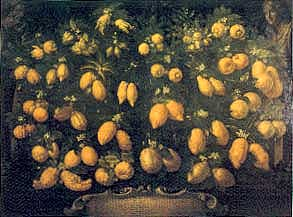 Bartolomeo Bimbi Citrus Collection des Medici