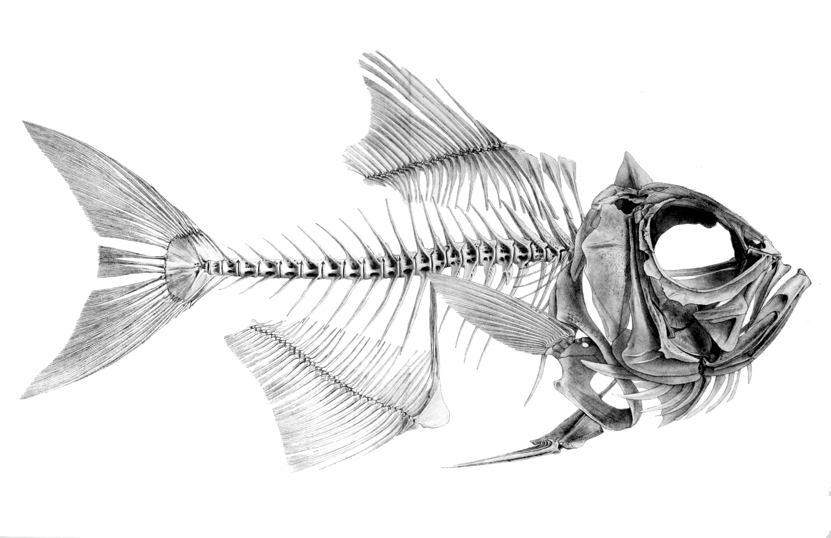 3d Fish Archive Nov 1