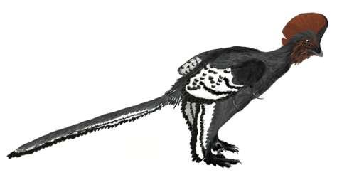 Anchiornis martyniuk