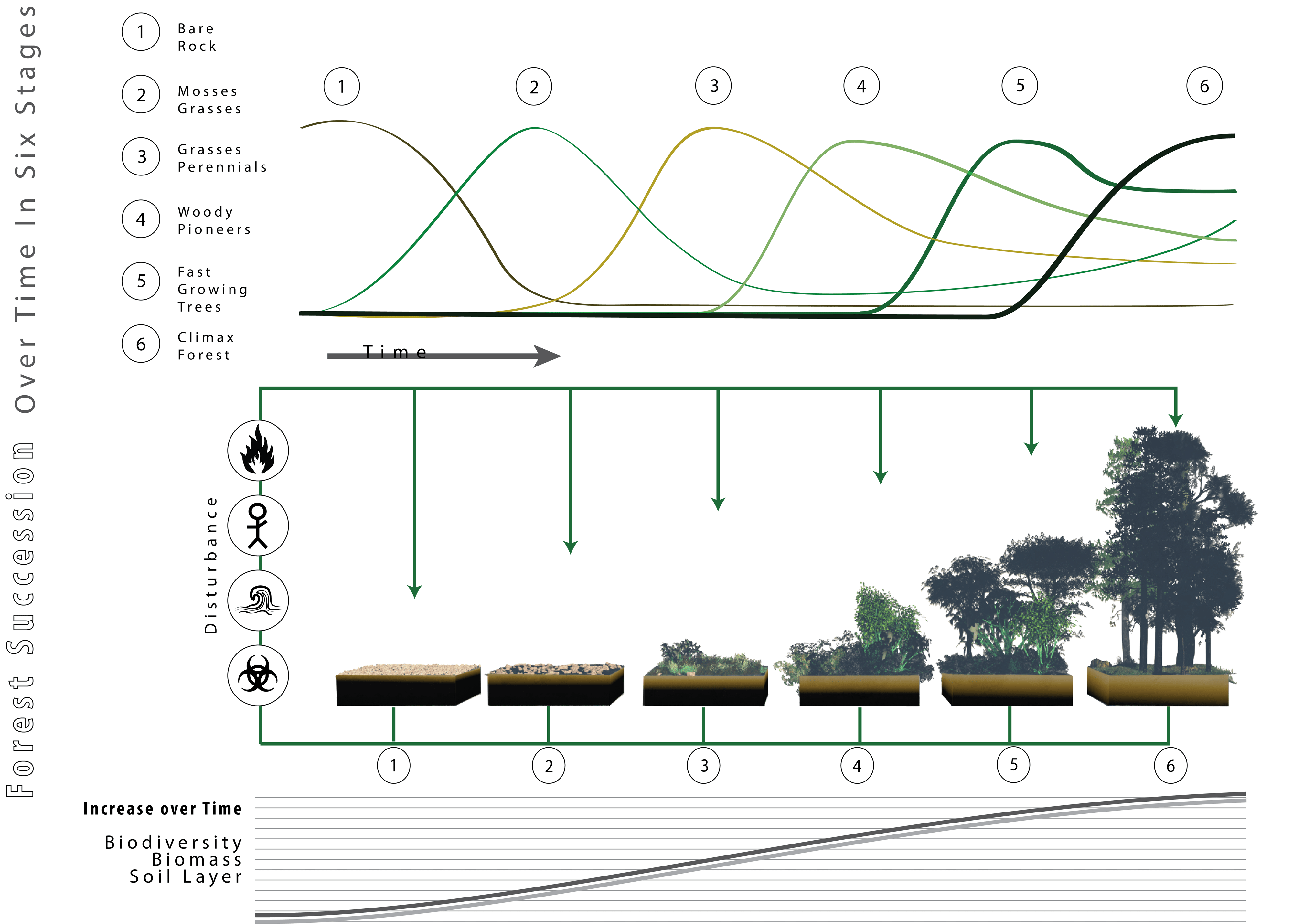 File Forest Succession Depicted Over Time