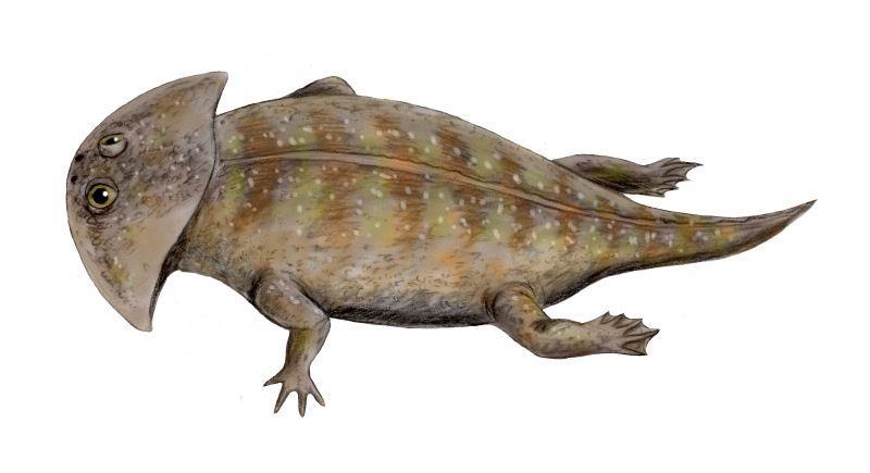 Artist's reconstruction of the extinct amphibian Gerrothorax pulcherrimus