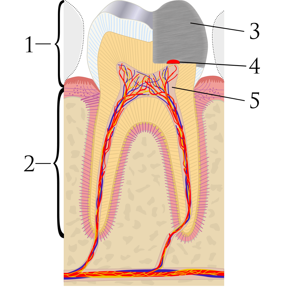 medium resolution of tooth diagram name