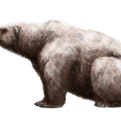 Panda Bear Diagram Mercruiser Alpha One Parts Ursus Maritimus Tyrannus - Wikipedia