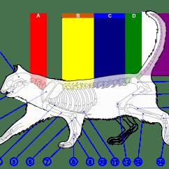 Cat Skeleton Diagram Labeled Kicker Cvr 12 2 Ohm Wiring File Of A Png