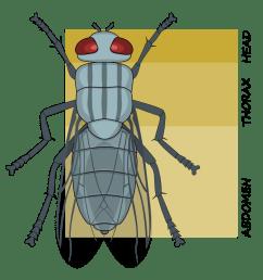 tagma biology wikiwand rh wikiwand com arthropod diagram arthropod diagram [ 1859 x 1881 Pixel ]