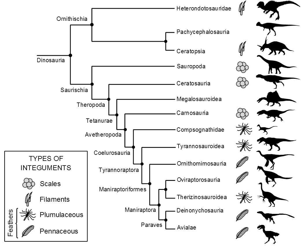 diagram types of feathers 4 3 liter engine file distribution in dinosauria jpg