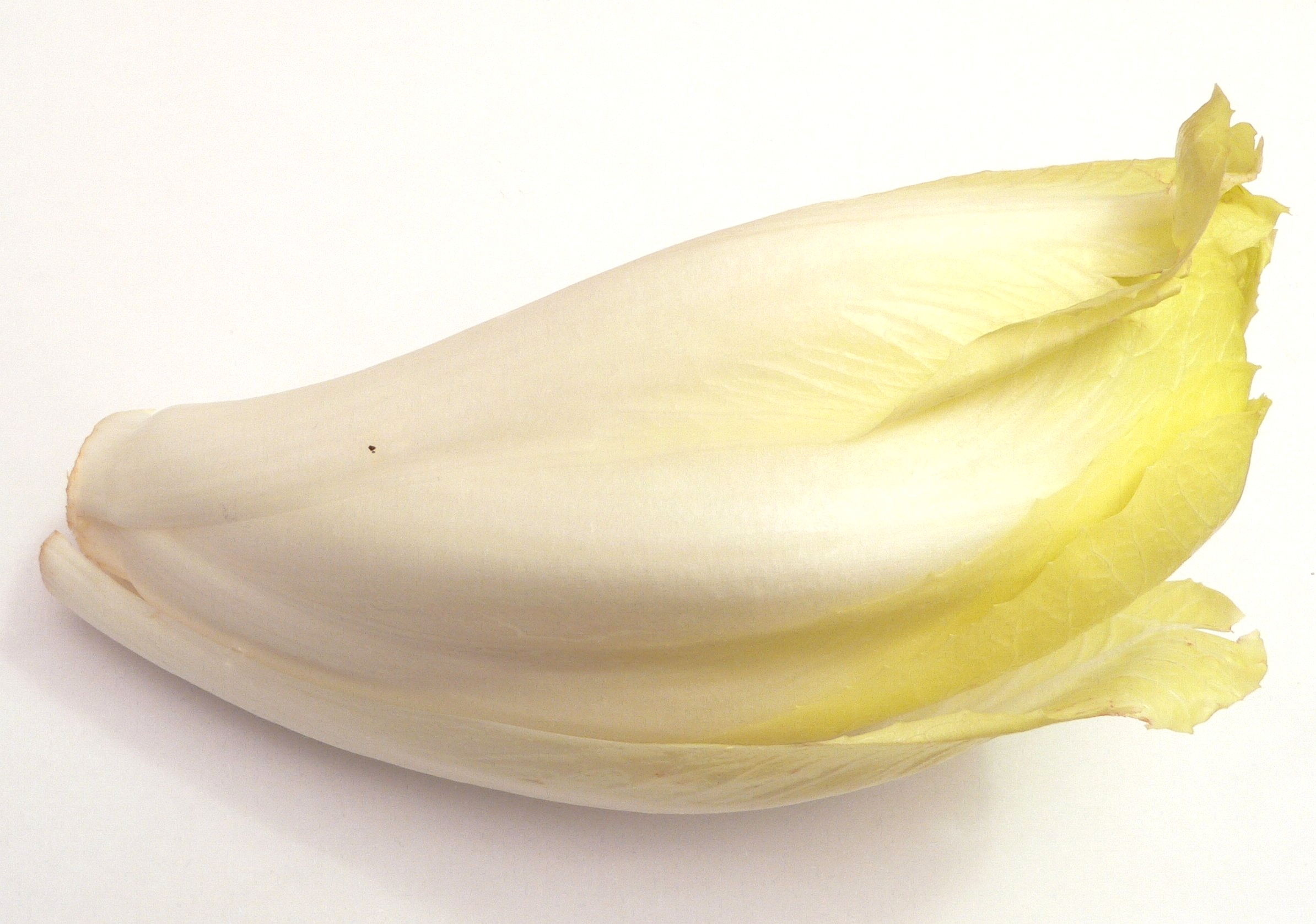 Witlof, chicory, belgian endives, witloof, or what ever you call it in your language