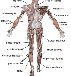 pictures of workout exercises upper body [ 1063 x 1297 Pixel ]