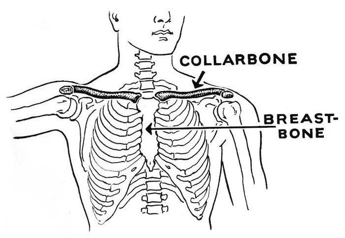 collarbone – Wikisłownik. wolny słownik wielojęzyczny