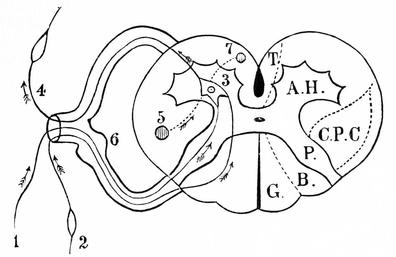 File Psm V42 D025 Diagrammatic Representation Of The