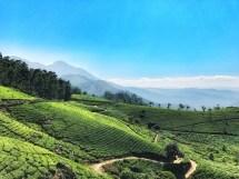 Munnar Kerala India Tea Fields