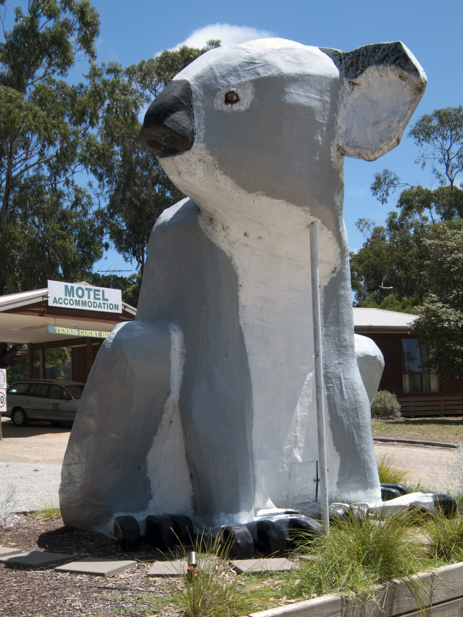 Big Koala sur Philip Island