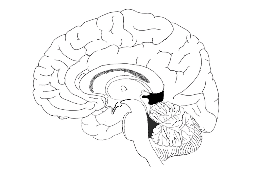 brain diagram sagittal view 1997 jeep grand cherokee laredo wiring file midsagital png wikimedia commons