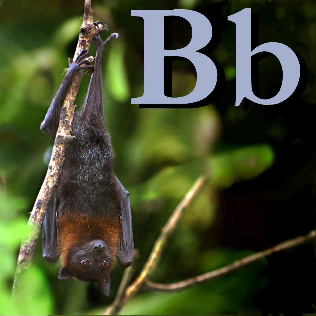File B Is For Bat