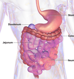 male digestive tract diagram [ 1650 x 1275 Pixel ]