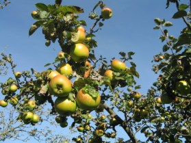 File:An Apple a day^ - geograph.org.uk - 273476.jpg