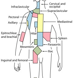 lymph node groups used for lymphoma staging these are not to be taken as involved field diagrams  [ 1350 x 1928 Pixel ]