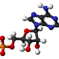 Adp Molecule Diagram Labeled 7 Pin Utility Trailer Wiring With Brakes File Adenosine Monophosphate Dianion 3d Balls Png