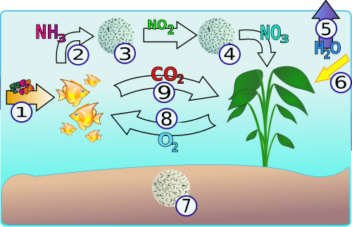 small resolution of file aquarium nitrogencycle png