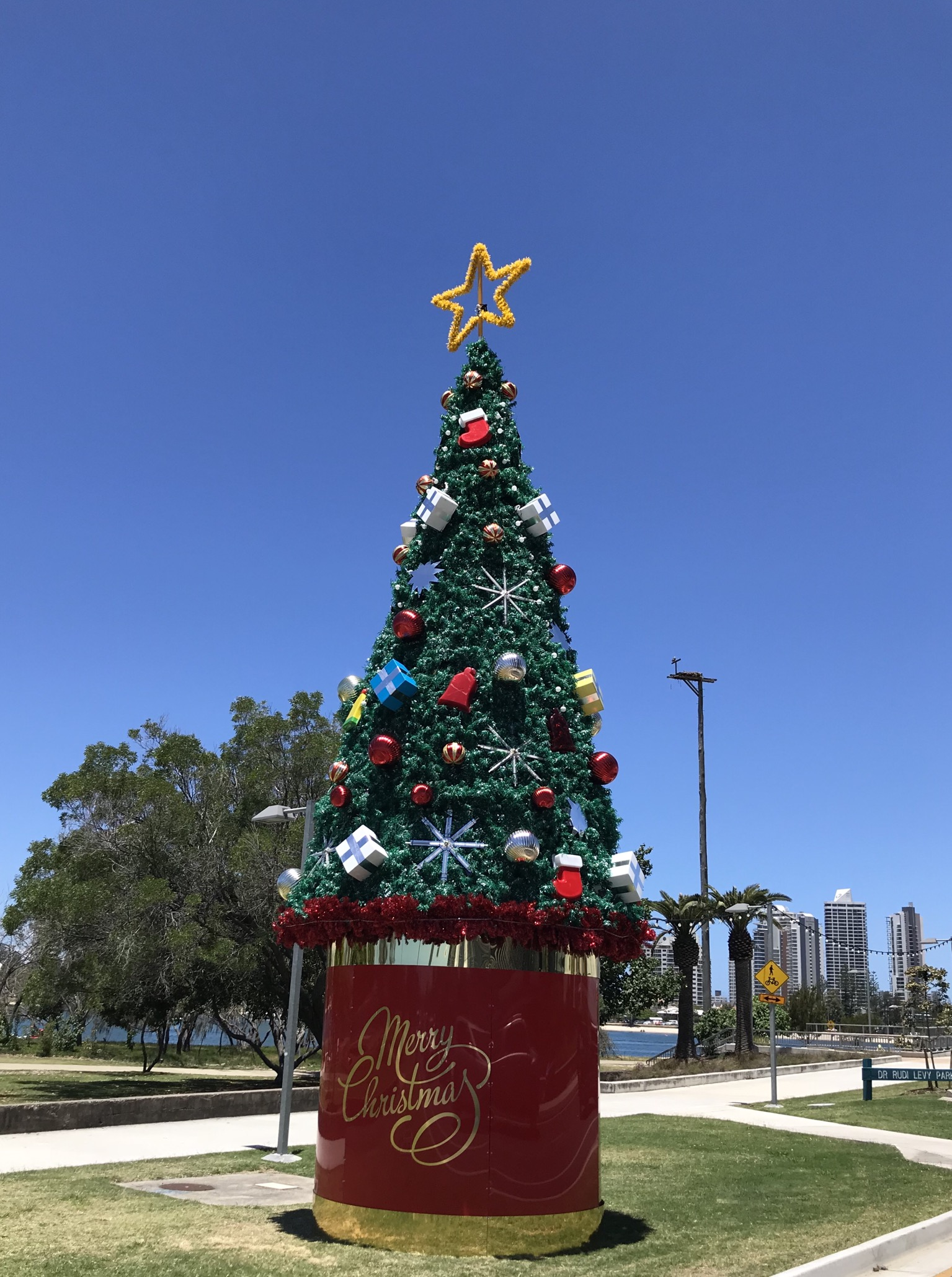File Christmas Tree In In Southport Queensland