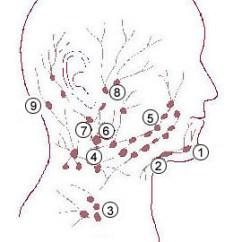 Diagram Lymph Nodes On Back Of Head Mov Wiring Retropharyngeal Wikipedia