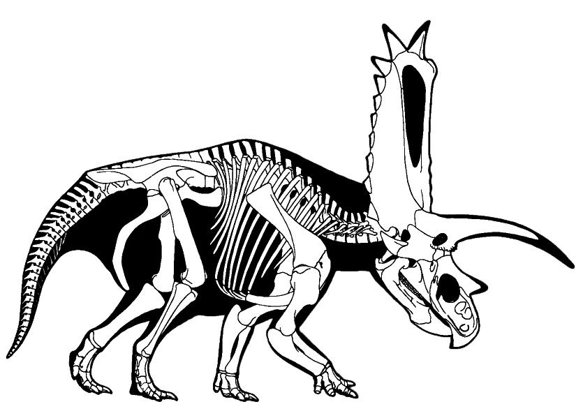 bones human skeleton diagram 12v led work light wiring pentaceratops – wikipedia