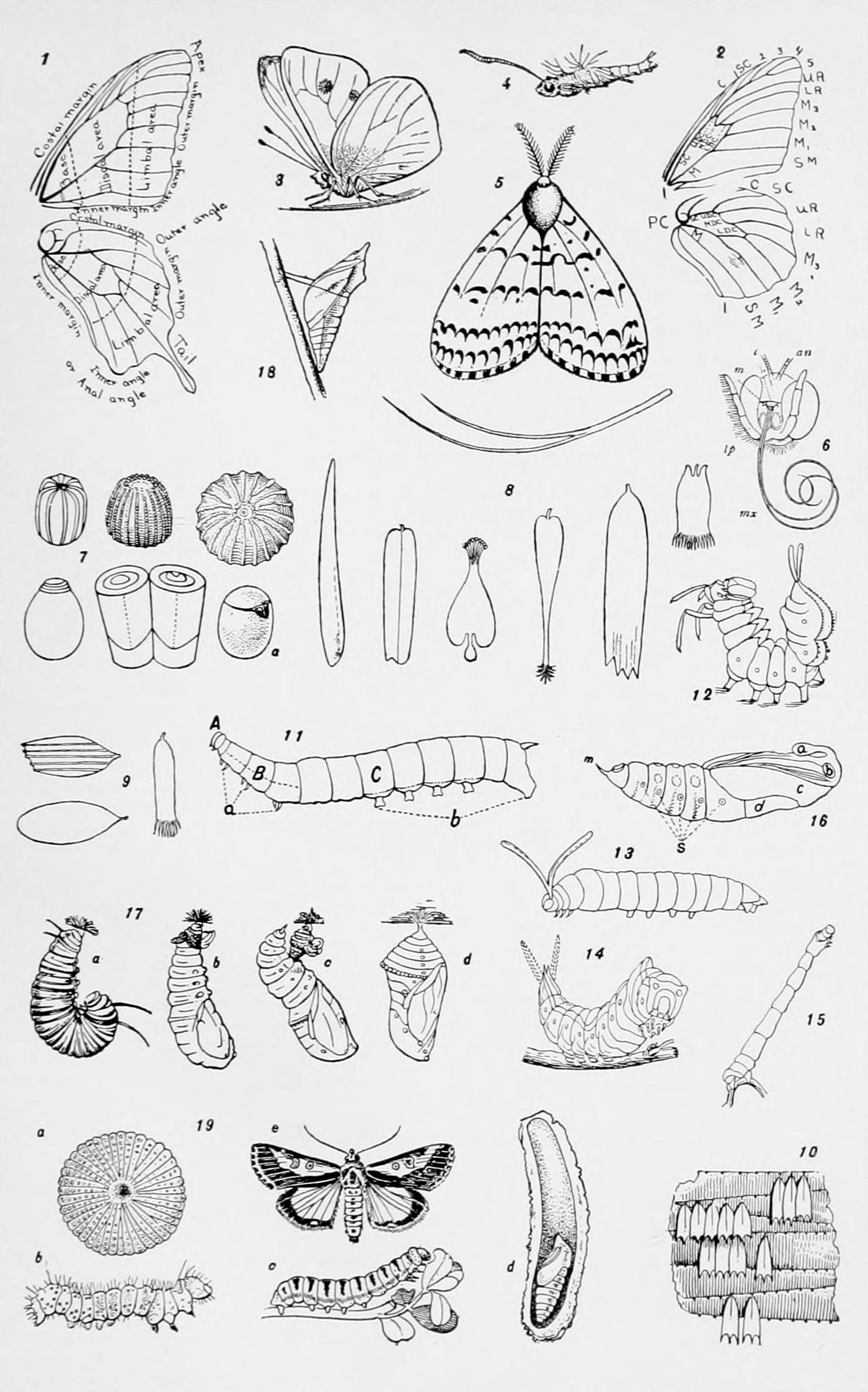 butterfly anatomy diagram vw beetle wiring 1968 file nie 1905 butterflies and moths jpg wikimedia commons
