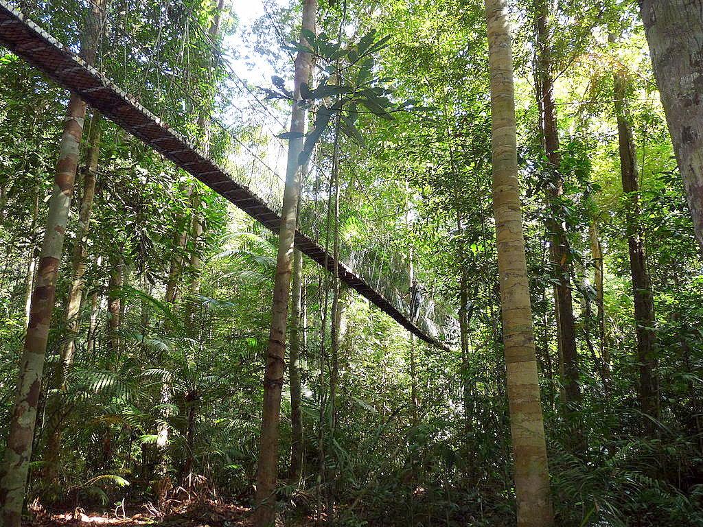 Taman Negara (Park Narodowy Malezji)